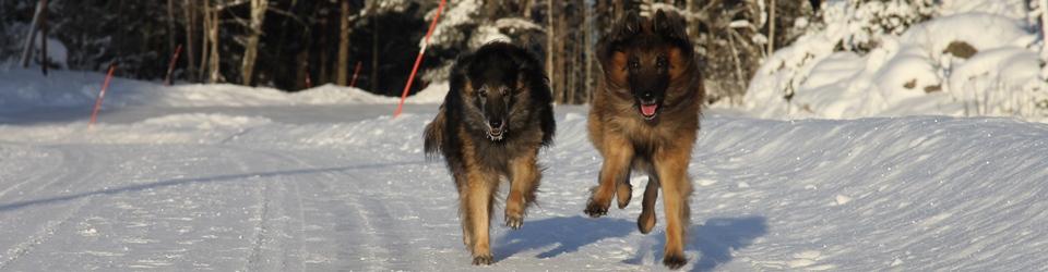 Linköpings Brukshundklubb